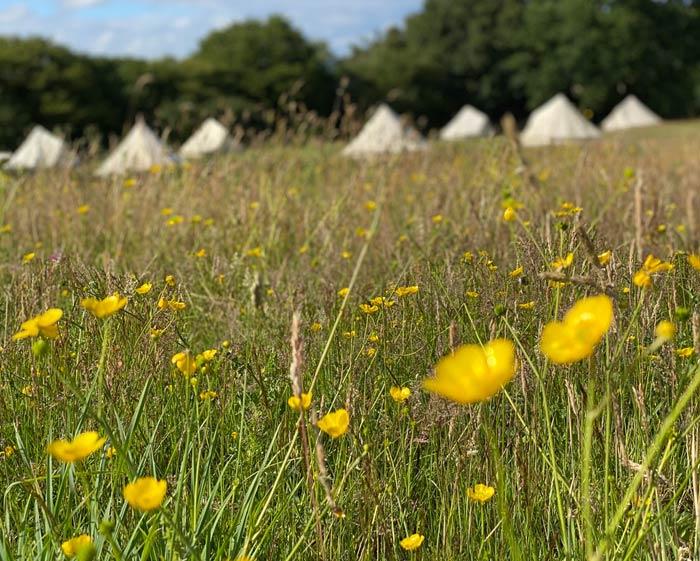 best woods meadow East Sussex campsite