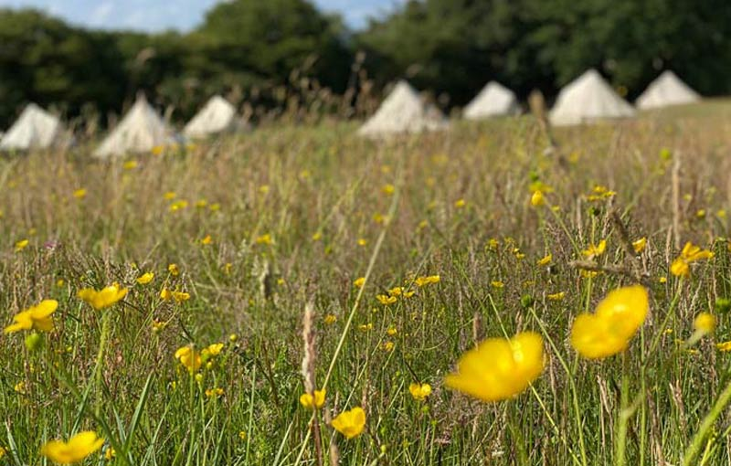 meadow sussex campsite pitches